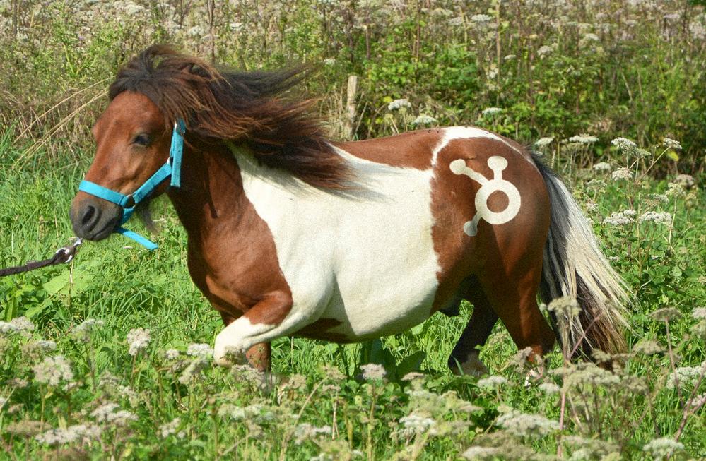 PonySpot.png